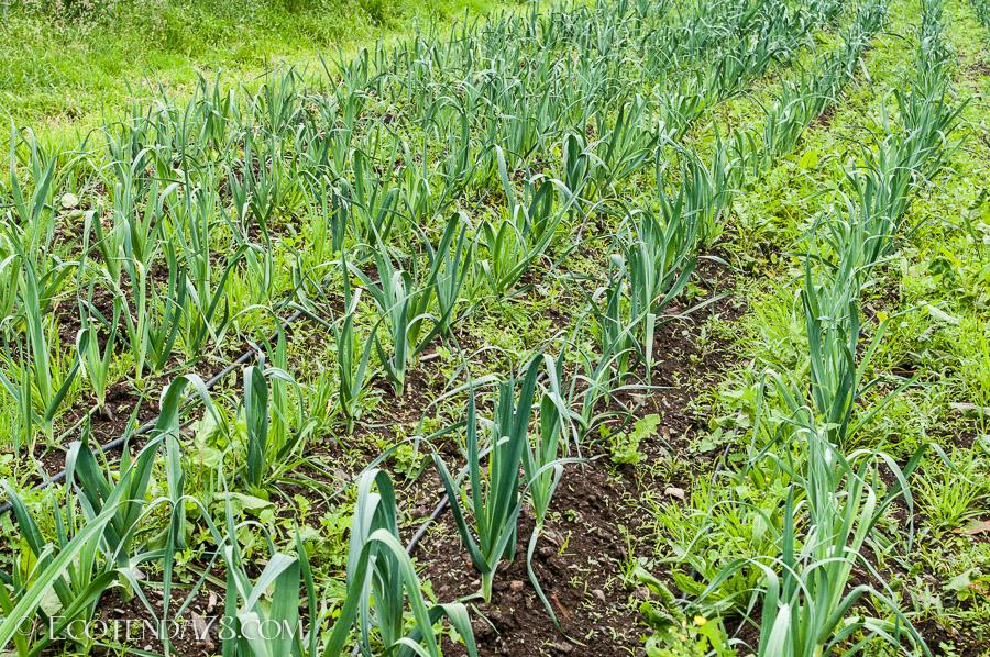 Curso Agricultura Ecolóxica