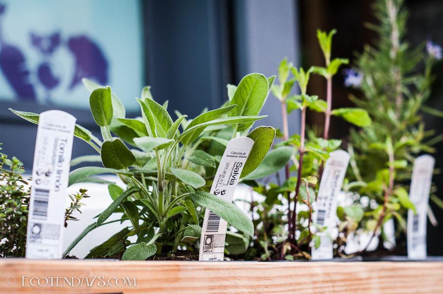 Planta Aromáticas e Culinarias
