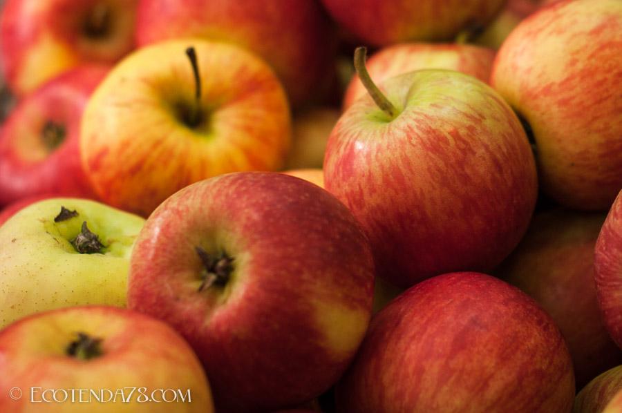 Mazás Ecolóxicas de Ortigueira